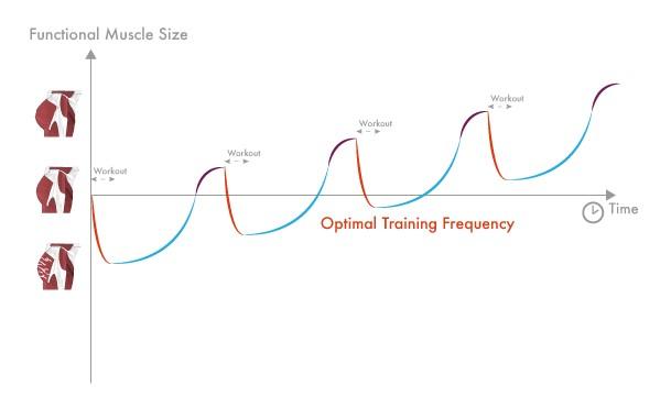 Optimale trainingsfrequentie