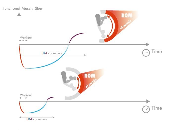 Range of motion en supercompensatie