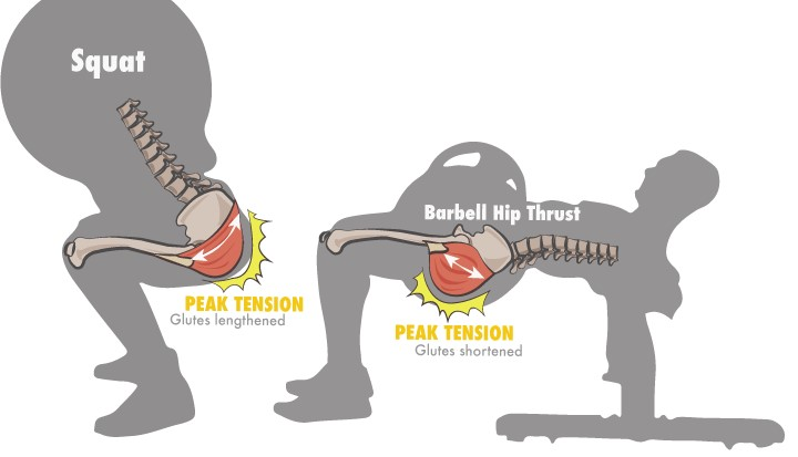 Squat vs hip thrust peak tension