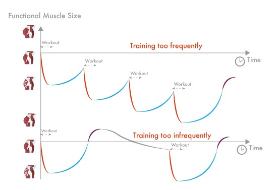 Trainingsfrequentie
